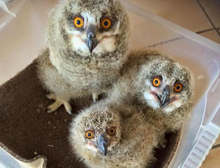 Screech Owl Sanctuary Newquay Cornwall Guide