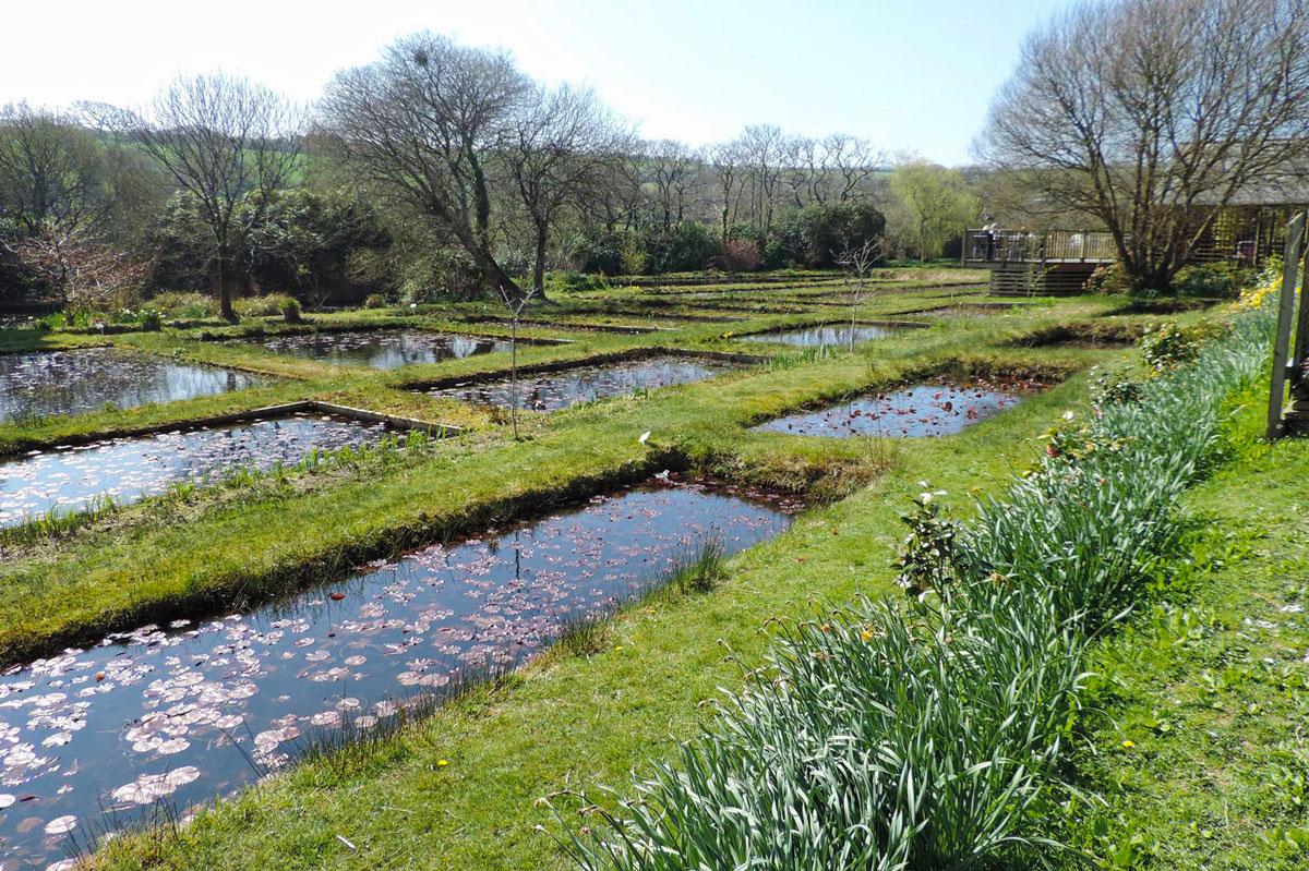 Water Gardens: Penrose Water Gardens - Truro