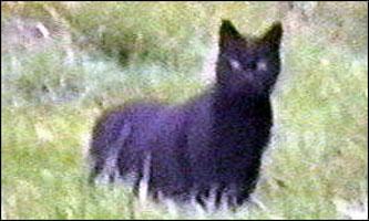 Still from video on from Bodmin moor