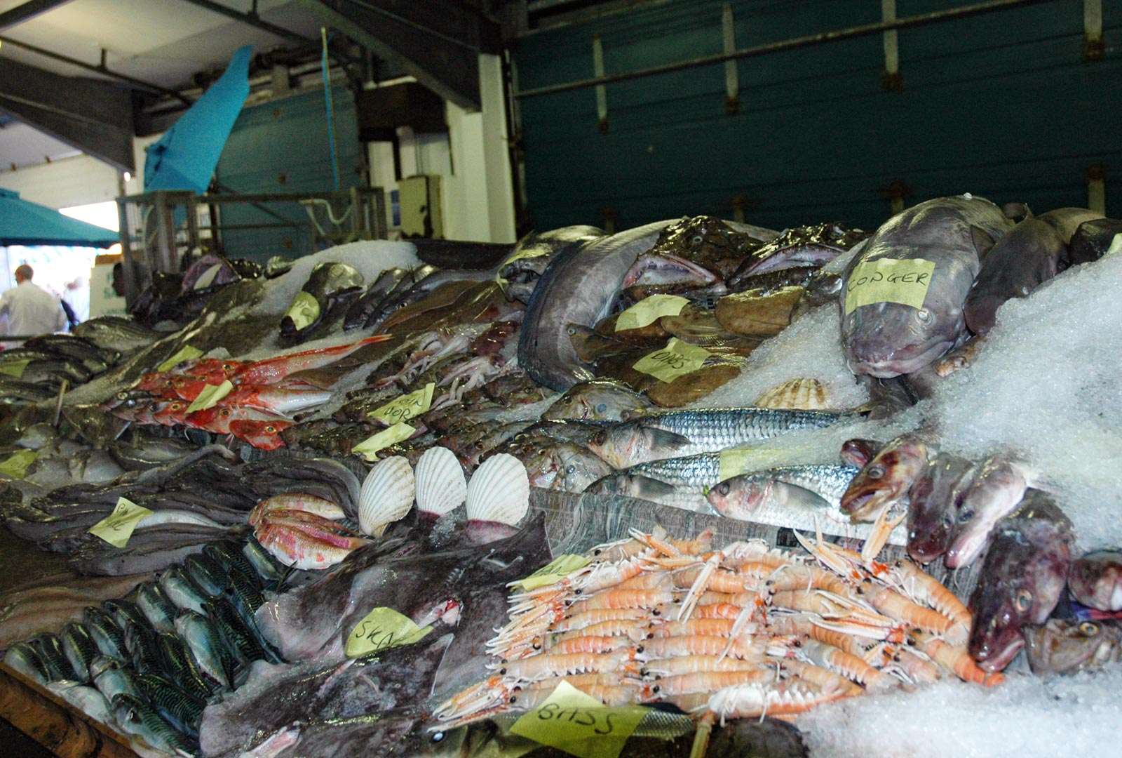 Catch on display at Newlyn Fish Market