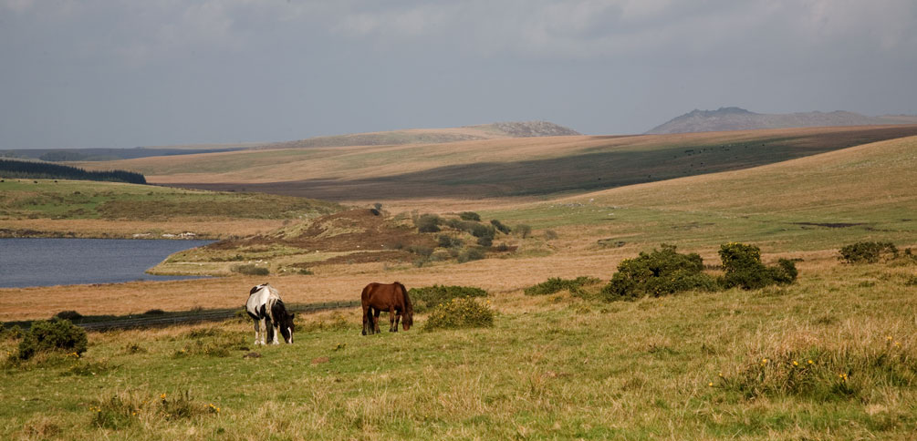 Bodmin Moor from Temple