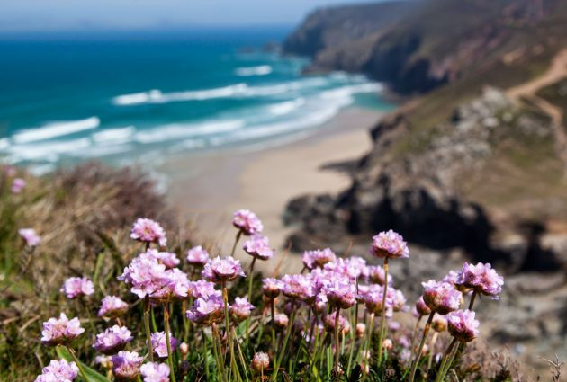 View from Chapel Porth cliffs