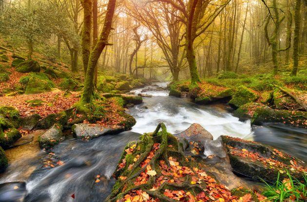 Autumn woodland walks