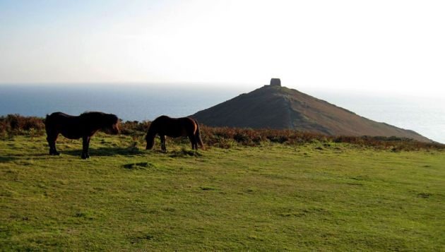 Rame Head Horses