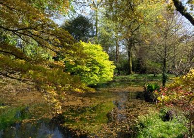 Burncoose Woodland Gardens
