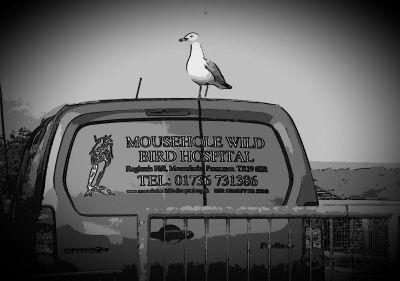 Mousehole Wild Bird Hospital