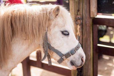 Springfields Pony Centre