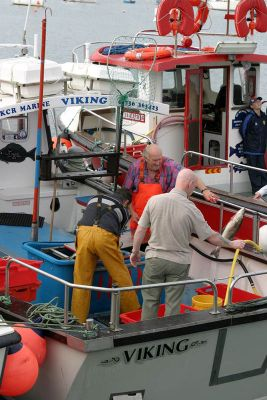 Sorting the catch - Penzance