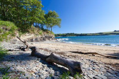 Bosahan Cove Driftwood