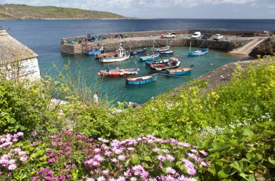 Coverack Harbour through the flowers