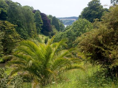 Glendurgan Valley View