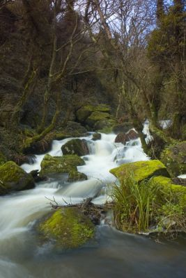 Lamorna valley winter stream