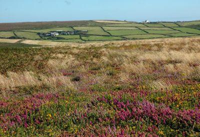 Moor and Farm Land