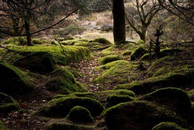 Mossy Rocks in Woods