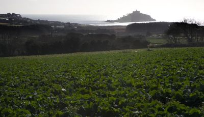 View Across the Cauli Fields