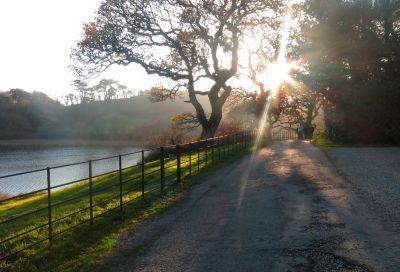 Autumn afternoon - Penrose Estate