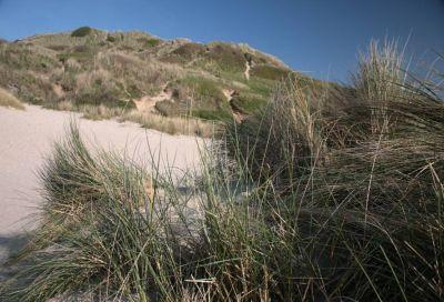Sand Dune - Rock