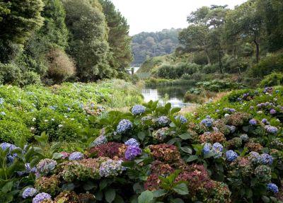 Trebah Gardens - Helford Glimpse