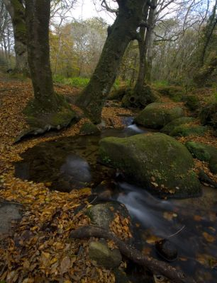 Trevaylor Stream - Autumn