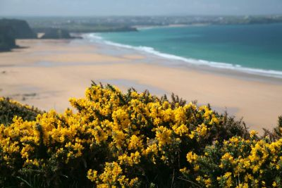 Watergate Bay Gorse