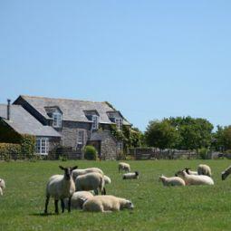 Carclaze Farm