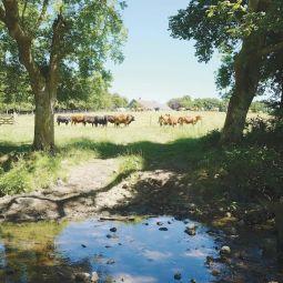 Trerise Farm