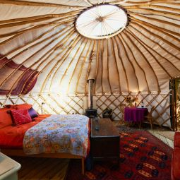 Glamping / luxury camping