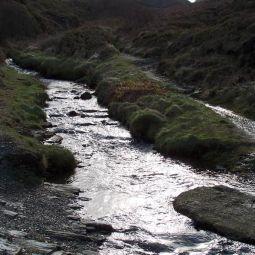 Stream, Blue Hills