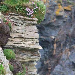 Godrevy cliffs
