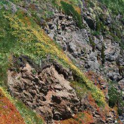 Lizard cliffs springtime