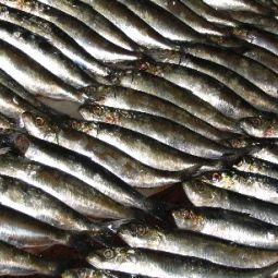 Fish supper