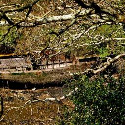 Derelict boat Frenchman's Creek