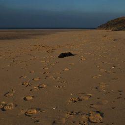Hayle Footprints