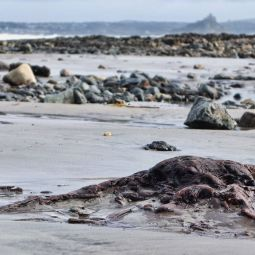 Ancient forest uncovered on Penzance beach