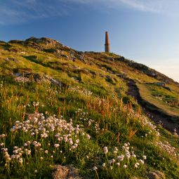 Cape Cornwall on a Summer's evening
