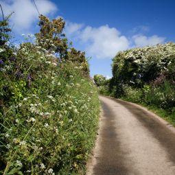 Summer Hedgerow