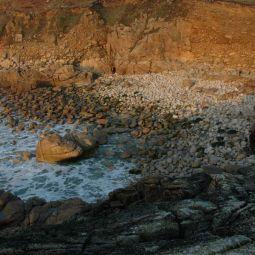 Cott Valley Cove