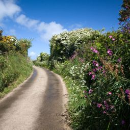 Cornish Country Lane