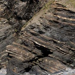 Crackington Formation