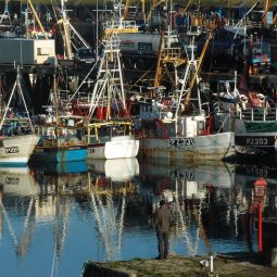 Newlyn Fishing Fleet