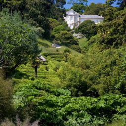 Glendurgan - View up the Valley