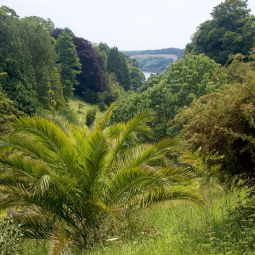 Glendurgan Valley View