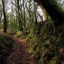 Lavethan Wood