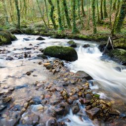 Luxulyan Valley river