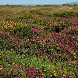 Moorland flowers