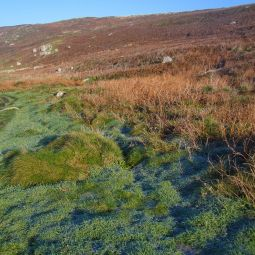 Moorland Colours
