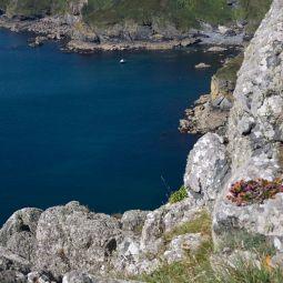 Cove near Nare Head