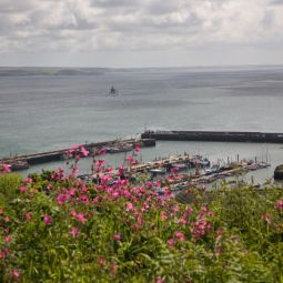 Newlyn Harbour View