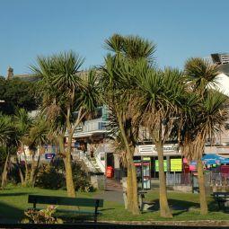 Newquay Palms