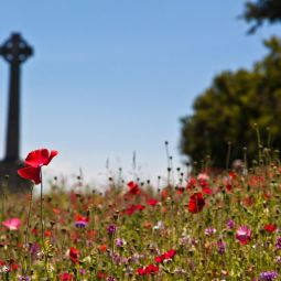 Padstow Poppies - War Memorial